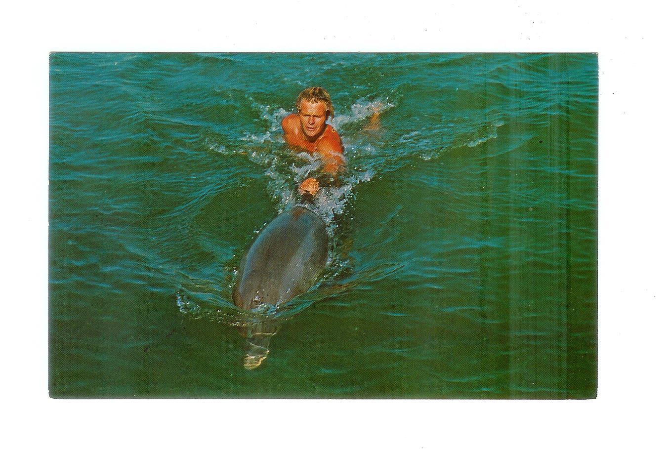 Chrome postcard. Mitzi, star of Flipper, Santini's Porpoise Training  School, Grassy Key, Florida.